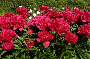 Доброе слово и дело даже цветку приятно