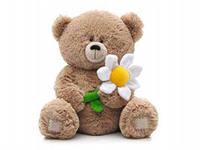 медвежонок и цветок