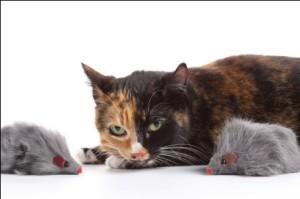 сказка про мышонка